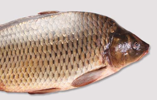 fisk när man är gravid